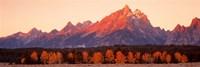Aspens, Teton Range, Grand Teton National Park, Wyoming, USA Fine-Art Print