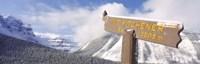 Clark's Nutcracker (Nucifraga columbiana) perching on mountain sign, Mt. Kitchener, Jasper National Park, Alberta, Canada Fine-Art Print