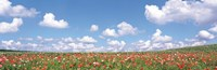 Meadow flowers with cloudy sky in background Fine-Art Print