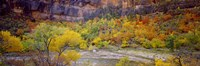 Big Bend in fall, Zion National Park, Utah, USA Fine-Art Print