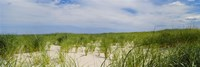 Sand dunes at Crane Beach, Ipswich, Essex County, Massachusetts, USA Fine-Art Print