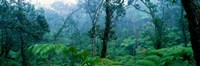 Trees in a rainforest, Hawaii Volcanoes National Park, Big Island, Hawaii, USA Fine-Art Print
