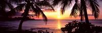 Palm trees on the coast, Kohala Coast, Big Island, Hawaii, USA Fine-Art Print