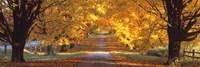 Road, Baltimore County, Maryland, USA Fine-Art Print
