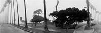 Palm Trees And Fog, San Diego, California Fine-Art Print