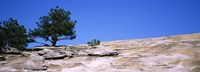 Trees on a mountain, Stone Mountain, Atlanta, Fulton County, Georgia Fine-Art Print