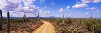 Road, Saguaro National Park, Arizona, USA Fine-Art Print