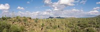Saguaro National Park Tucson AZ USA Fine-Art Print