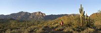 Hiker standing on a hill, Phoenix, Arizona, USA Fine-Art Print
