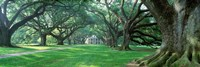 USA, Louisiana, New Orleans, Oak Alley Plantation, plantation home through alley of oak trees Fine-Art Print