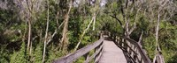 Boardwalk passing through a forest, Lettuce Lake Park, Tampa, Hillsborough County, Florida, USA Fine-Art Print
