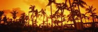 Palm trees on the beach, The Setai Hotel, South Beach, Miami Beach, Florida, USA Fine-Art Print
