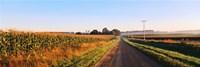 Road Along Rural Cornfield, Illinois, USA Fine-Art Print