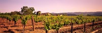 Sattui Winery, Napa Valley, California, USA Fine-Art Print