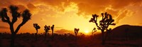 Sunset, Joshua Tree Park, California Fine-Art Print