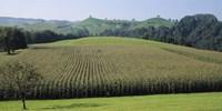 Switzerland, Canton Zug, Panoramic view of Cornfields Fine-Art Print