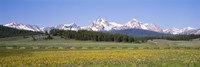 Flowers in a field with a mountain in the background, Sawtooth Mountains, Sawtooth National Recreation Area, Stanley, Idaho, USA Fine-Art Print