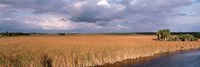 USA, Florida, Big Cypress National Preserve along Tamiami Trail Everglades National Park Fine-Art Print