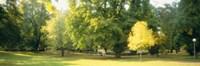 Trees in a park, Wiesbaden, Rhine River, Germany Fine-Art Print
