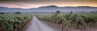 Road in a vineyard, Napa Valley, California, USA Fine-Art Print
