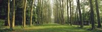 Trees Versailles France Fine-Art Print