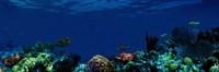 Underwater Fine-Art Print