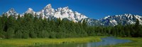 Trees along a river, Near Schwabachers Landing, Grand Teton National Park, Wyoming Fine-Art Print