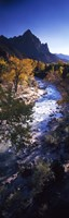 High angle view of a river flowing through a forest, Virgin River, Zion National Park, Utah, USA Fine-Art Print