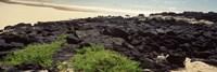 Lava rocks at a coast, Floreana Island, Galapagos Islands, Ecuador Fine-Art Print