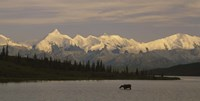 Moose standing on a frozen lake, Wonder Lake, Denali National Park, Alaska, USA Fine-Art Print