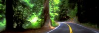 Road, Redwoods, Mendocino County, California, USA Fine-Art Print