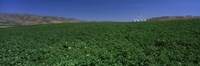 USA, Idaho, Burley, Potato field surrounded by mountains Fine-Art Print