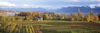 Farm, Rapperswil, Zurich, Switzerland Fine-Art Print