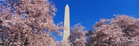 Cherry Blossoms Washington Monument Fine-Art Print