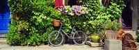 Bicycle In Front Of Wall Covered With Plants And Flowers, Rochefort En Terre, France Fine-Art Print