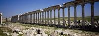 Row of Columns, Cardo Maximus, Apamea, Syria Fine-Art Print