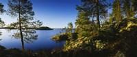 Trees at the lakeside, Lake Saimaa, Puumala, Finland Fine-Art Print