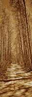 Trees along a road, Log Cabin Gold Mine, Eastern Sierra, Californian Sierra Nevada, California, USA Fine-Art Print