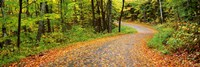 Road passing through a forest, Country Road, Peacham, Caledonia County, Vermont, USA Fine-Art Print
