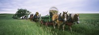 Historical reenactment, Covered wagons in a field, North Dakota, USA Fine-Art Print