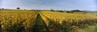 Panoramic view of vineyards, Schloss Vollrads, Johannisberg, Oestrich-Winkel, Rheingau, Germany Fine-Art Print
