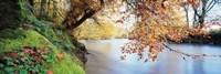 Trees along a river, River Dart, Bickleigh, Mid Devon, Devon, England Fine-Art Print
