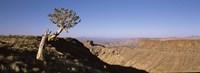Lone Quiver tree (Aloe dichotoma) in a desert, Ai-Ais Hot Springs, Fish River Canyon, Namibia Fine-Art Print