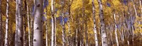 Forest, Grand Teton National Park, Teton County, Wyoming, USA Fine-Art Print