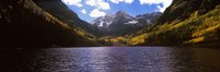 Trees in a forest, Snowmass Wilderness Area, Maroon Bells, Colorado, USA Fine-Art Print
