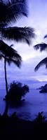 Palm trees on the coast, Colombia (purple and blue) Fine-Art Print