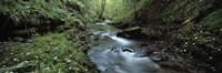 River flowing through a forest, River Lyd, Lydford Gorge, Dartmoor, Devon, England Fine-Art Print