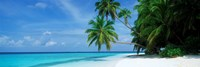 Palm trees on the beach, Fihalhohi Island, Maldives Fine-Art Print