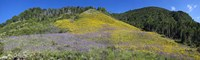 Sunflowers and larkspur wildflowers on hillside, Colorado, USA Fine-Art Print