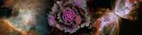 Cabbage with butterfly nebula Fine-Art Print
